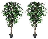 AMERIQUE AM0912FC6FTPK2 Gorgeous Ficus Trees Artificial Silk Plant, 6', Emerald Green