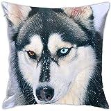Caonm Ojos impares Siberian Husky Square Square Throw Pillow Fundas Fundas de colchón 45 X 45 cm