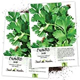 Seed Needs, Cilantro Culinary Herb (Coriandrum sativum) Twin Pack of...