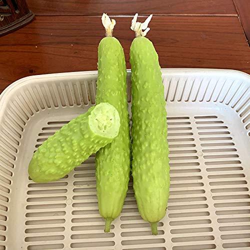Semillas de hortalizas y frutas Zhongke Baiyu Semillas de pepino Espinas femeninas fuertes Pepino con fragancia fuerte 300 cápsulas