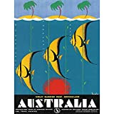 Wee Blue Coo Great Barrier Reef Queensland Australia Fish