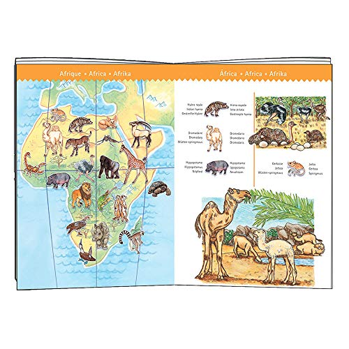 Djeco - P. observación los Animales del Mundo