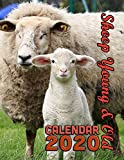 Sheep Young and Old Calendar 2020: 14 Month Desk Calendar for Lovers of the World's Wooliest...
