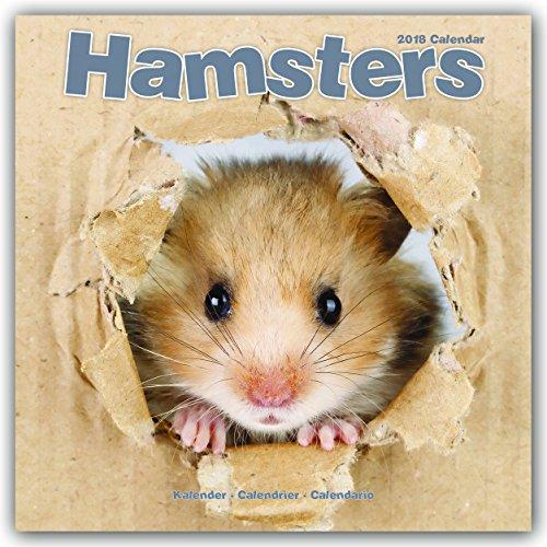 Hamsters – Hamster 2018: Original Avonside-Kalender [Mehrsprachig] [Kalender] (Wall-Kalender)
