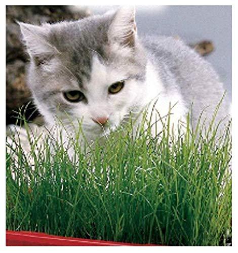 100 c.ca zaden gras voor katten - in originele verpakking gemaakt in italië - kattenkruiden