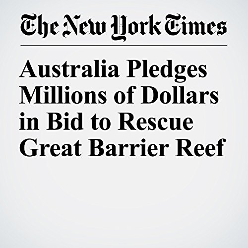 Australia Pledges Millions of Dollars in Bid to Rescue Great Barrier Reef copertina