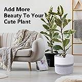 Zoom IMG-1 colmanda cesto per piante vasi