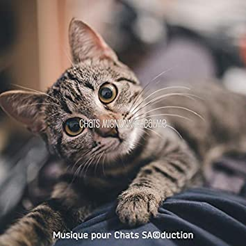 Chats Mignonnes Calme