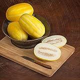 David's Garden Seeds Fruit Melon Torpedo SL9938 (Yellow) 25 Non-GMO, Hybrid Seeds
