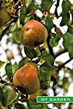 My Garden: Ripe pears. Fruit growing, fruit harvesting, garden notebook, garden logbook, gardener's gift, notes for hobby gardeners. Format A5, 120 pages, light grey lined. Notes in the garden year.
