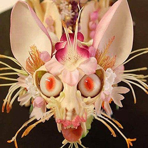Tomasa Samenhaus- 20/50pcs Seltene Affe Gesicht Orchidee Samen,Teufel blumen Topf Bonsai Mehrjährig winterhart Zierpflanzen für Barkon, Indoor,Garten