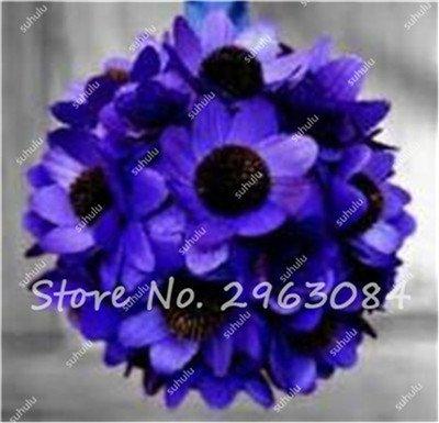 20 Pcs vente chaude Graines de tournesol bio Passez Helianthus annuus Graines comestibles Graines de jardinage Fleurs d'ornement Mini Bonsai 18