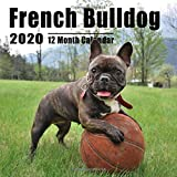 Mini Calendar 2020 7x7 French Bulldog: High Quality French Bulldog Photos Small Calendar With Inspirational Quotes each Month