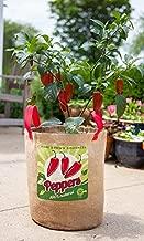 Panacea Peppers Grow Bags, 11
