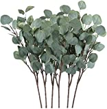Chenguo 3 Pcs Artificial Silver Dollar Eucalyptus Leaf Spray in Green 25.6' Tall Artificial Greenery Crafts For Party Home Wedding Decor (Green)