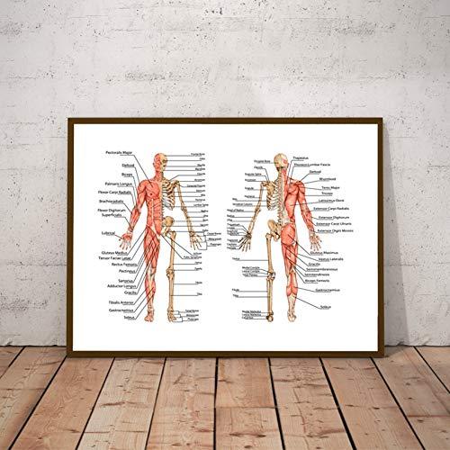 GUDOJK muurschildering menselijke anatomie skelet afdrukken dokterspraktijker muurkunst poster decor menselijke botten en spieren didactische tafel canvasschilderij 60x80cm(24x32inch)