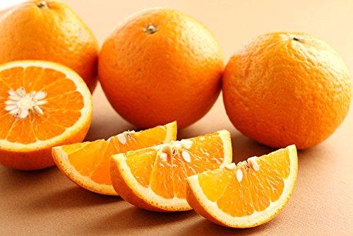 【訳あり 家庭用】和歌山産 ジューシー清見オレンジ 5kg