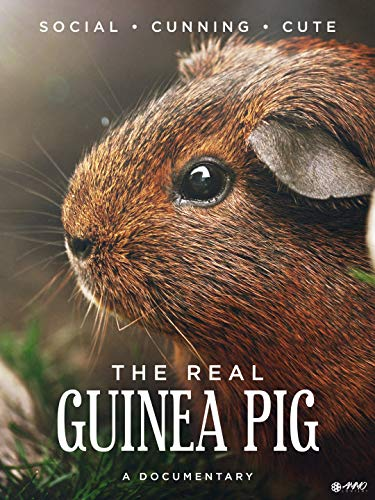 The Real Guinea Pig
