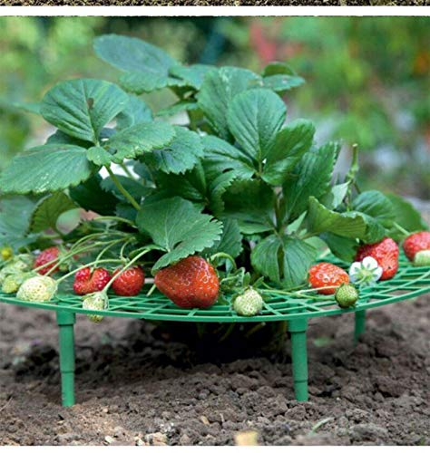 Strawberry Growing Racks Strawberry Planting Stand Plant Climbing Stand Balcony Potted Vegetable Gardening Stand 1