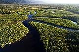 Amazonas Brasilien Fluss Wald Bild XXL Wandbild Kunstdruck