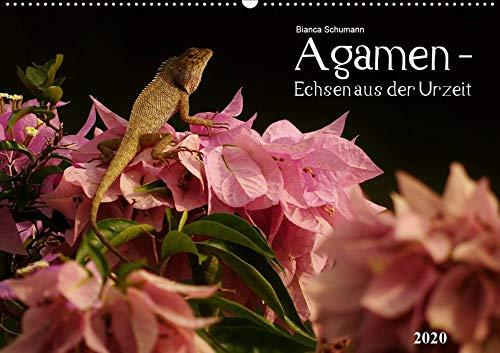 Agamen - Echsen aus der UrzeitCH-Version (Wandkalender 2020 DIN A2 quer): Aufnahmen kleiner Echsen in ihrem natürlichem Lebensraum (Monatskalender, 14 Seiten )