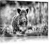 Pixxprint Stolzes Wildschwein im Wald als Leinwandbild |