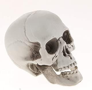 full size plastic skull
