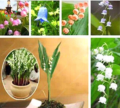 Vistaric 50 Pcs Lily Of The Valley Fleur Graines Intérieur Rare Cloche Orchidée Graines Riche Aroma Bonsaï Graines De Fleurs Mignon Et Belles Plantes