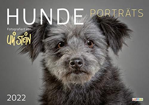 Uli Stein – Hunde Porträts 2022: Monatskalender für die Wand im Großformat: Faszinierende Fotografien in einem hochwertigen Wandkalender