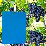 ZOORE 20 Stück blauen Leimtafeln gegen Thripse, Reispflanzenküken blauensticker, Dekorative Leimtafel recht langlebig. Gartenarbeit Pflanzenschutz & Schädlingsbekämpfung 20 Kabelbinder