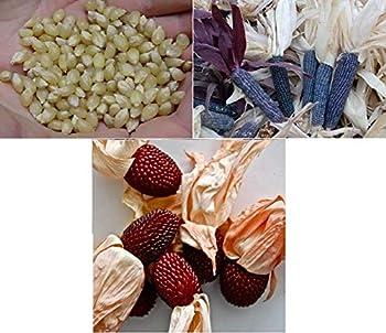David s Garden Seeds Collection Set Popcorn 4345  Multi  3 Varieties 300 Non-GMO Open Pollinated Seeds