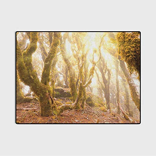 Rainforest Kids Rugs Door Rug Morning Sun Rays Mist in Virgin Mountain Forest Moss on Trees Natural Paradise car Carpet Green Brown 5.3 x 6.6 Ft