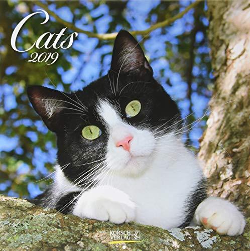 Cats (BK) 224819 2019: Broschürenkalender mit Ferienterminen. Katzen und Kätzchen. 30 x 30 cm