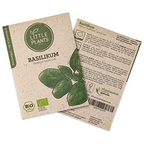 Little Plants BIO-Basilikumsamen (Ocimum basilicum) Genoveser   BIO-Kräutersamen   Nachhaltige Verpackung aus Graspapier   Kräuter-Samen   BIO-Saatgut für ca. 800 Basilikum-Pflanzen