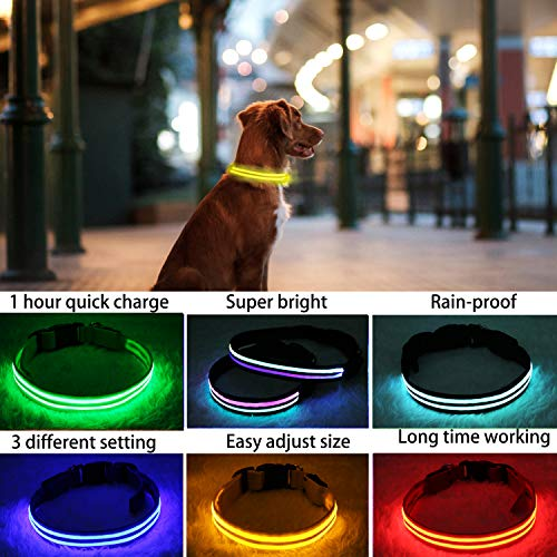 PPWW Light Up LED Dog Collar - Super Bright - USB Rechargeable, Rainproof - Perfect Use in Rainy Day Small, Yellow