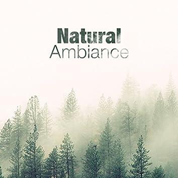 Natural Ambiance