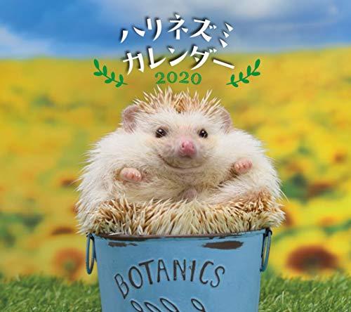 ハリネズミカレンダー 2020 Hedgehog Calendar (カレンダー)