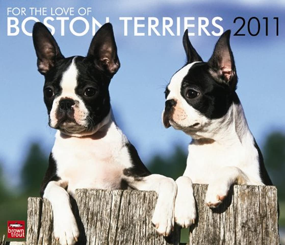 メリー権限山積みのFor the Love of Boston Terriers 2011 Calendar