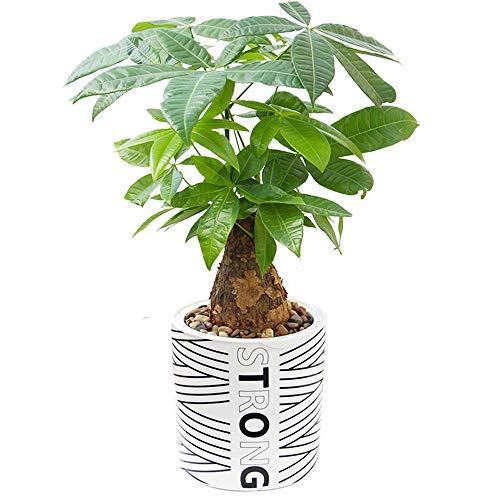 XHZJ Pot de Fleur intérieur Rond semoir Plante Noir et Blanc créatif Pot de Fleur rayé Paresseux Automatique Aspiration Verte courge orchidée en Plastique Pot de Fleur Mode rayé Pot de Fleur Rond
