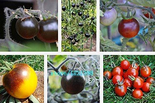 100pcs / lot Graines Heirloom rose Oxheart tomate graines de légumes en pot maison jardin livraison gratuite