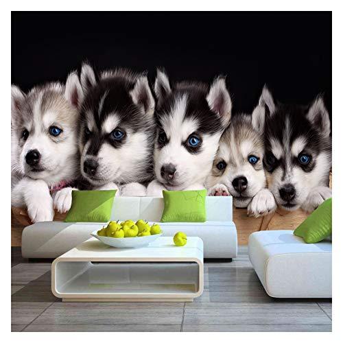 Niedlicher Hund Tier Welpe Fototapete Wandbild Haustiere Kinderzimmer Tierarzt Poster Husky Wanddekoration