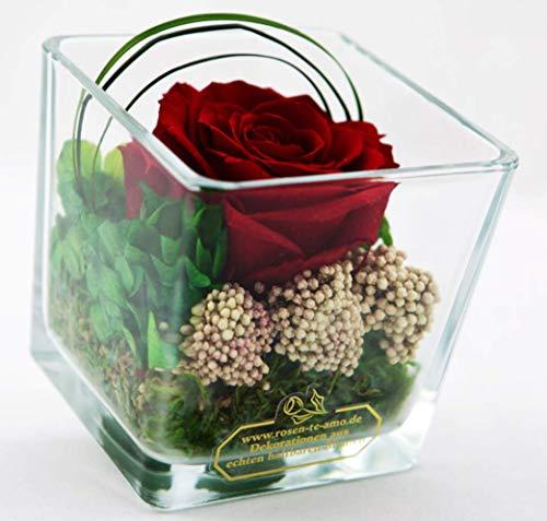 Rosen-Te-Amo Infinity Premium Rose in hochwertiger Würfel Vase, 100% echte Dekorative-Pflanzen und Moose; Haltbare...