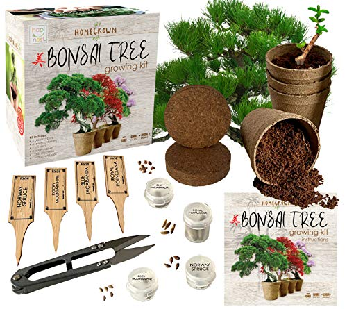 Bonsai Tree Indoor Starter Kit 4 Bonsai Tree Seed Types - DIY Unique Gardening Plant Crafts Hobbies Gifts for Adults Men and Women