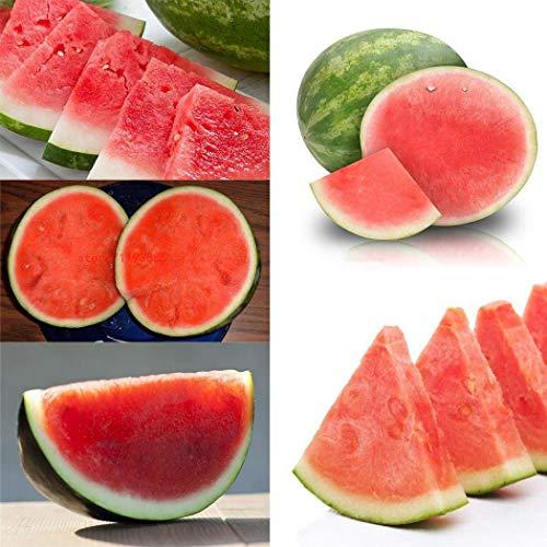 Qulista Samenhaus - 30pcs BIO Wassermelone 'Red Star, F1' ohne Kern, Obst Samen exotisch mehrjährig winterhart auf Balkon & Terrasse