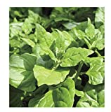 Youandmes New Zealand Spinach Seeds Organic Tetragonia Tetragonioides Heirloom Vegetable Seeds Non-GMO for Home Garden Planting Highest Quality