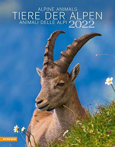 Animali delle Alpi. Calendario 2022. Ediz. multilingue
