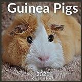 Guinea Pigs 2021 Calendar: 12 Month Calendar With Many Colorful Photos (Pig Breed Calendar)