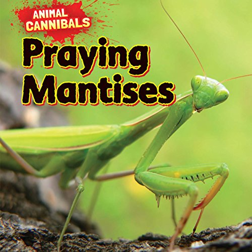 Praying Mantises (Animal Cannibals)