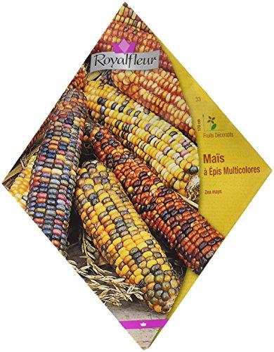 Royalfleur PFRV00033 Graines de Maïs à Epis Multicolores