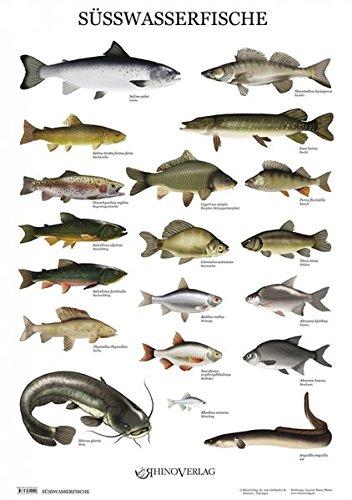 Süßwasserfische - Poster